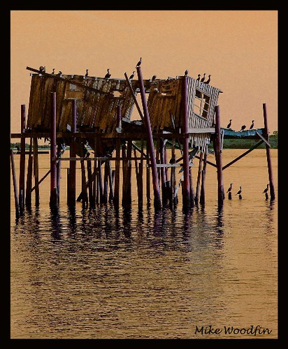 travel sunset orange usa fish reflection pelicans water birds photoshop sunrise canon bay photo cool nikon flickr fuji gulf florida awesome picture filter photograph weathered fl fowl hue crusty cedarkey stilts bigbend gulfcoast fishhouse abigfave flickraward mikewoodfin flickraward5
