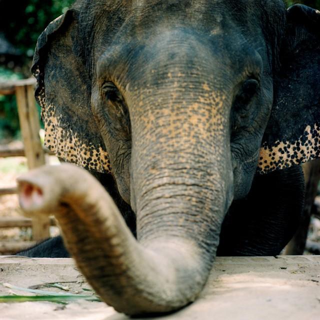 Elephant from Flickr via Wylio