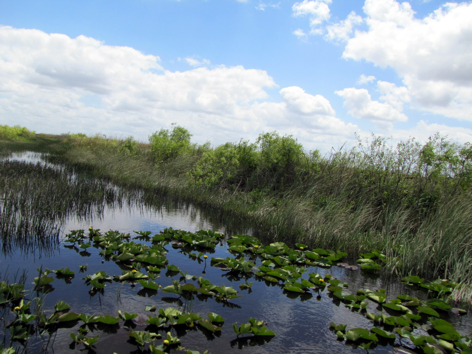 Everglades Fan Boat Toar Cooper Town Airboat Rides And