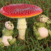 The toadstool and the leprechauns