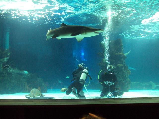 Top Ten Aquariums In The United States