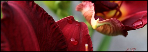flowers macro canon wv lilies westvirginia canont1i