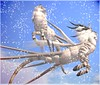 Wendocampi 2