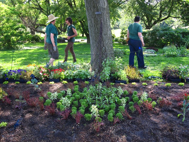 BBG horticulture interns work in the 90 degree heat to get plants in the ground for the Annual Border.