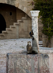 rhodes-cat-fountain