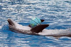 whale(0.0), killer whale(0.0), animal(1.0), marine mammal(1.0), fish(1.0), common bottlenose dolphin(1.0), marine biology(1.0), short-beaked common dolphin(1.0), wind wave(1.0), dolphin(1.0),