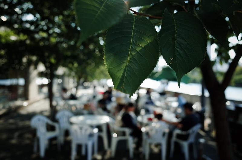 午後の木陰