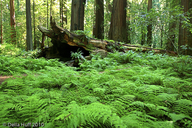Redwood Magic Humboldt County