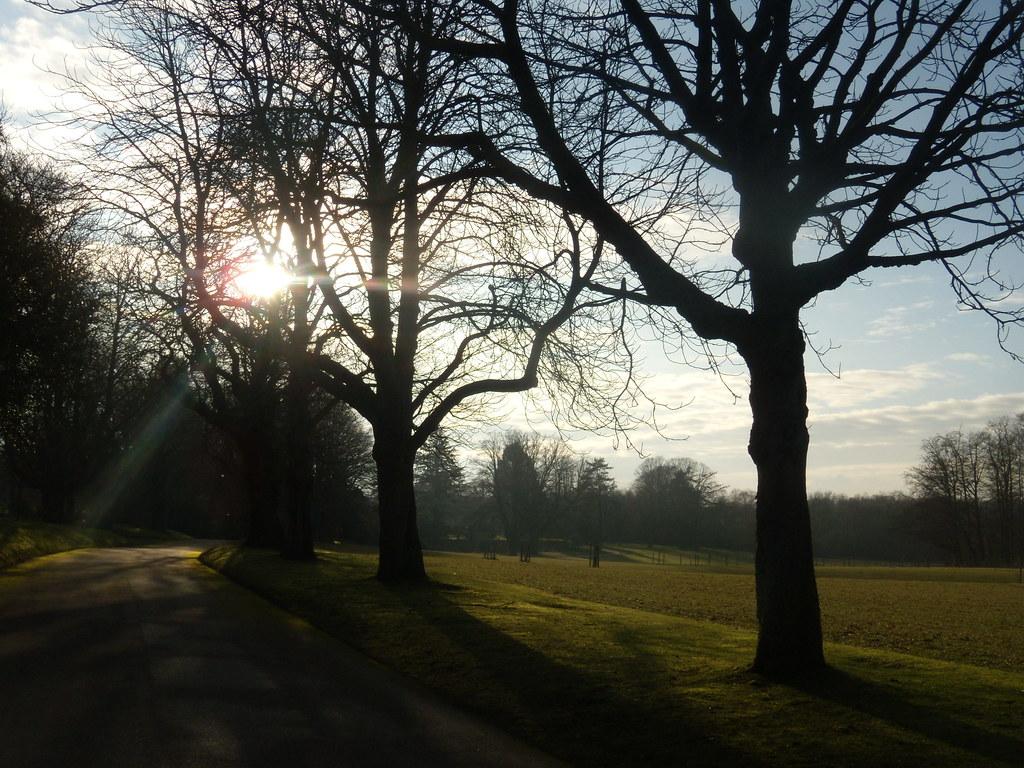 Trees, Ayot Place driveway Welwyn Circular