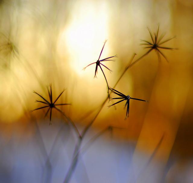 Sun, Snow, and Stars