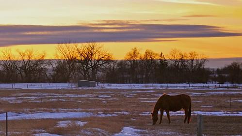 sunset sky horse clouds southdakota sd blackhillsnationalforest