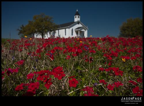 texas roadtrip wildflowers refugio cheapside goliad