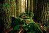 Hollybank Forest, Tasmania, Australia