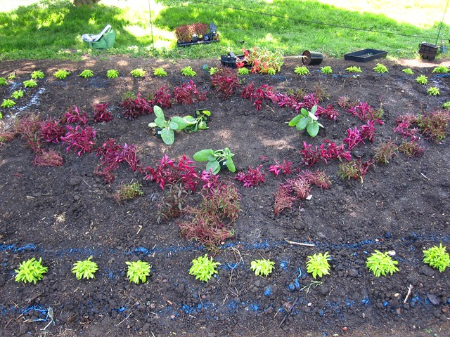 A diamond shape being planted in the Annual Border.