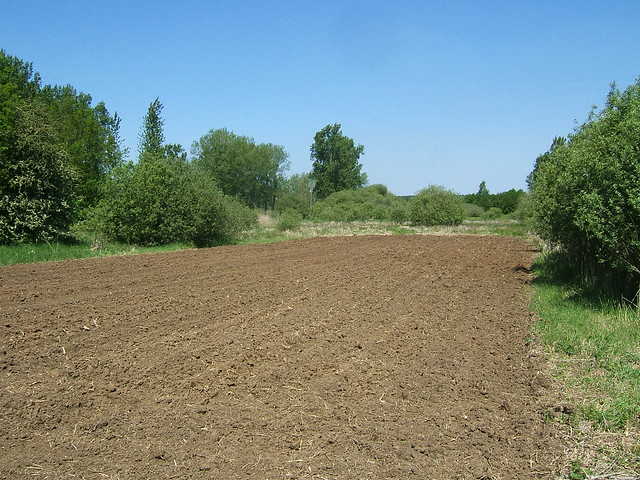 Red soil definition meaning for Soil dictionary
