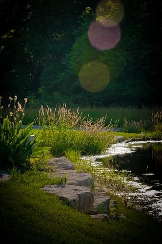 green grass landscape pond weeds rocks dof bank lensflare vignette nikon70200mm nikond300s