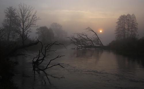 trees fog sunrise river landscape mgła rzeka drzewa wschód gwda krajobraz świt fotocompetition fotocompetitionbronze