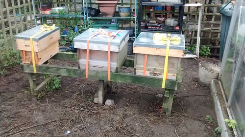 bee hives July 17
