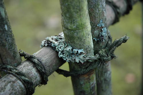 Lichen slowly making itself at home, twine, bamboo fence, Wedgwood, Seattle, Washington, USA by Wonderlane