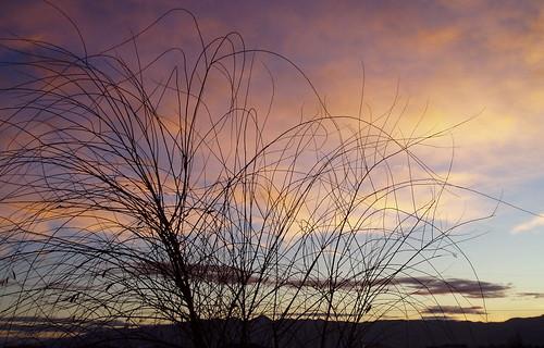 trees sunset nevada