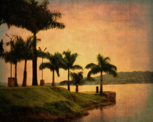 africa sunset texture 35mm palms warm uganda lakevictoria humid f20 primelens munyonyo nikond90 notfarfromkampala unlikehere