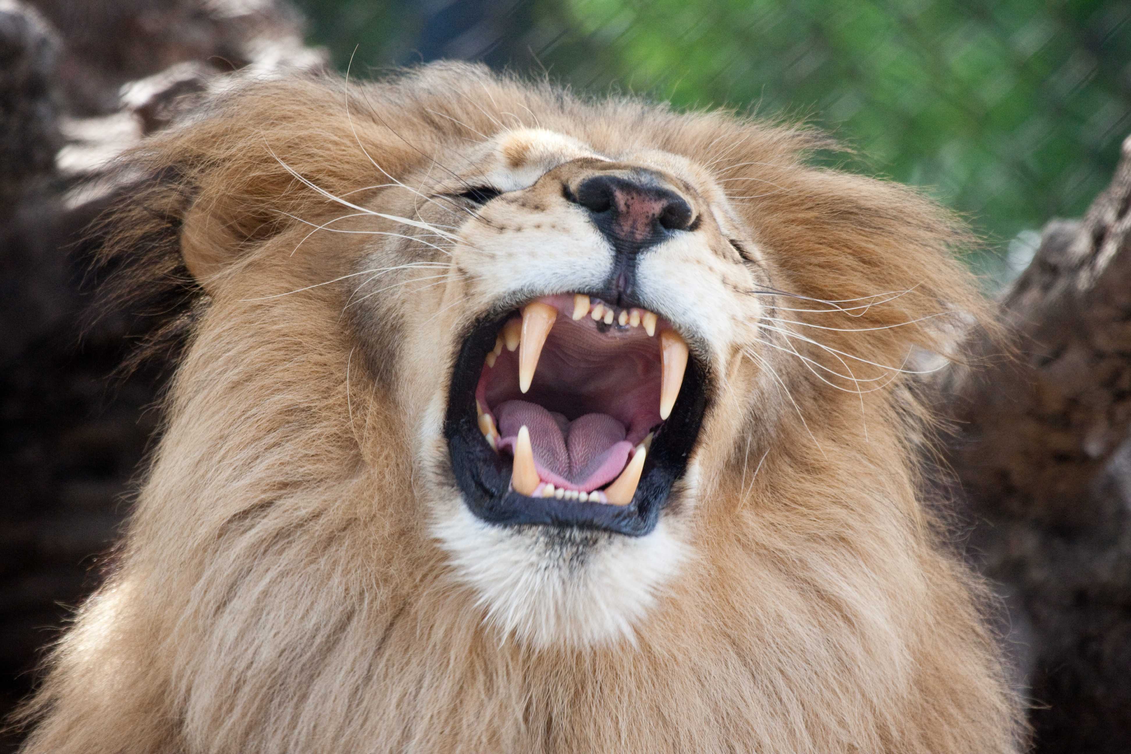 Teeth of the Lion | Flickr - Photo Sharing!