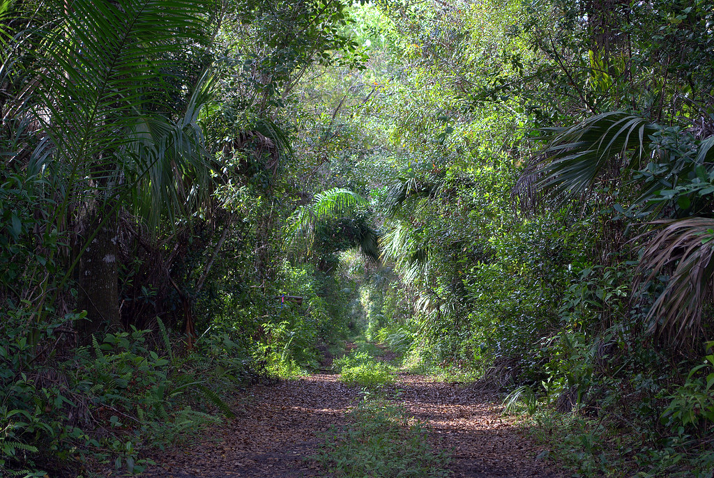Trail - Fakahatchee Strand State Preserve - Collier County - Florida - 22 December 2009