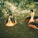 Outtake - 357/365: Splashin' Fun by [ embr ]