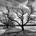 Winter Tree by hbp_pix
