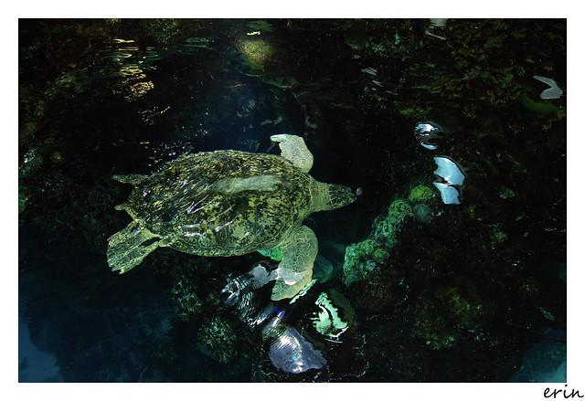 Boston Aquarium Conference Room For Rent