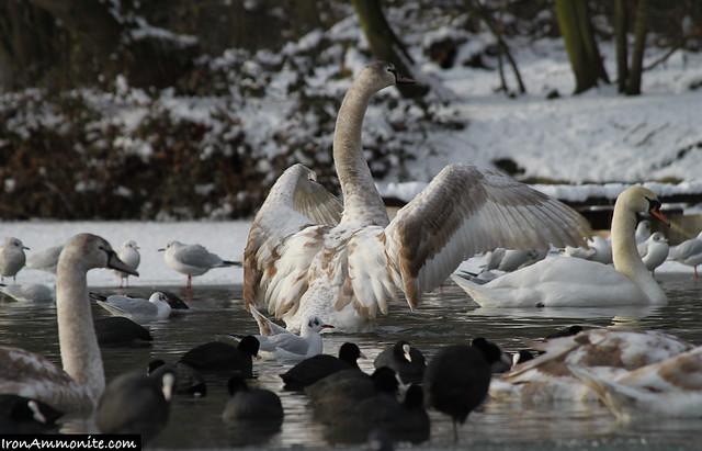 Swan Travel Iron Reviews