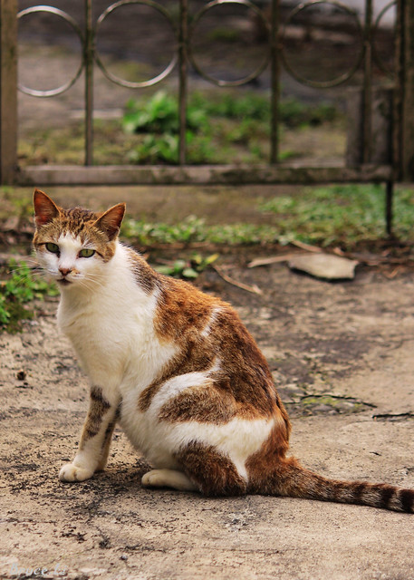小花猫 | flickr – 相片分享!