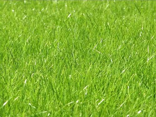 TemStock - Grass 1