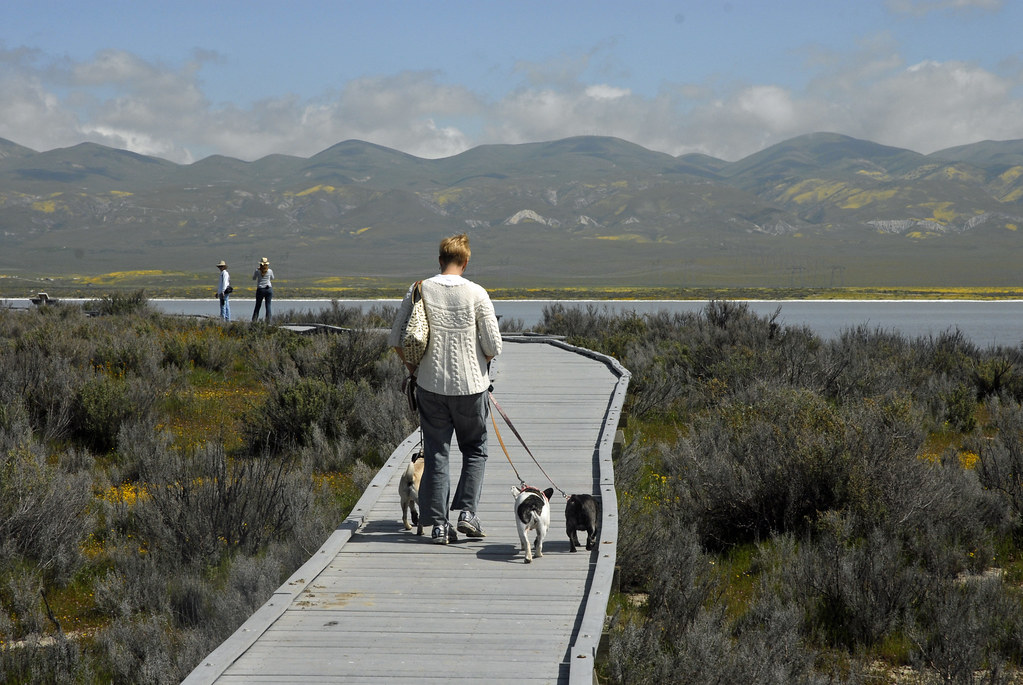 Walking the board walk at Soda Lake