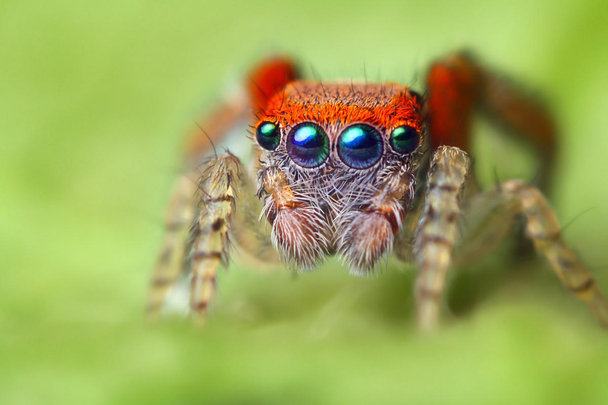 Insectos de cerca en hd taringa - Insectos en casa fotos ...