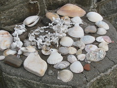oyster mushroom(0.0), pebble(0.0), conch(0.0), sea snail(1.0), clam(1.0), invertebrate(1.0), seashell(1.0), cockle(1.0), clams, oysters, mussels and scallops(1.0), rock(1.0),