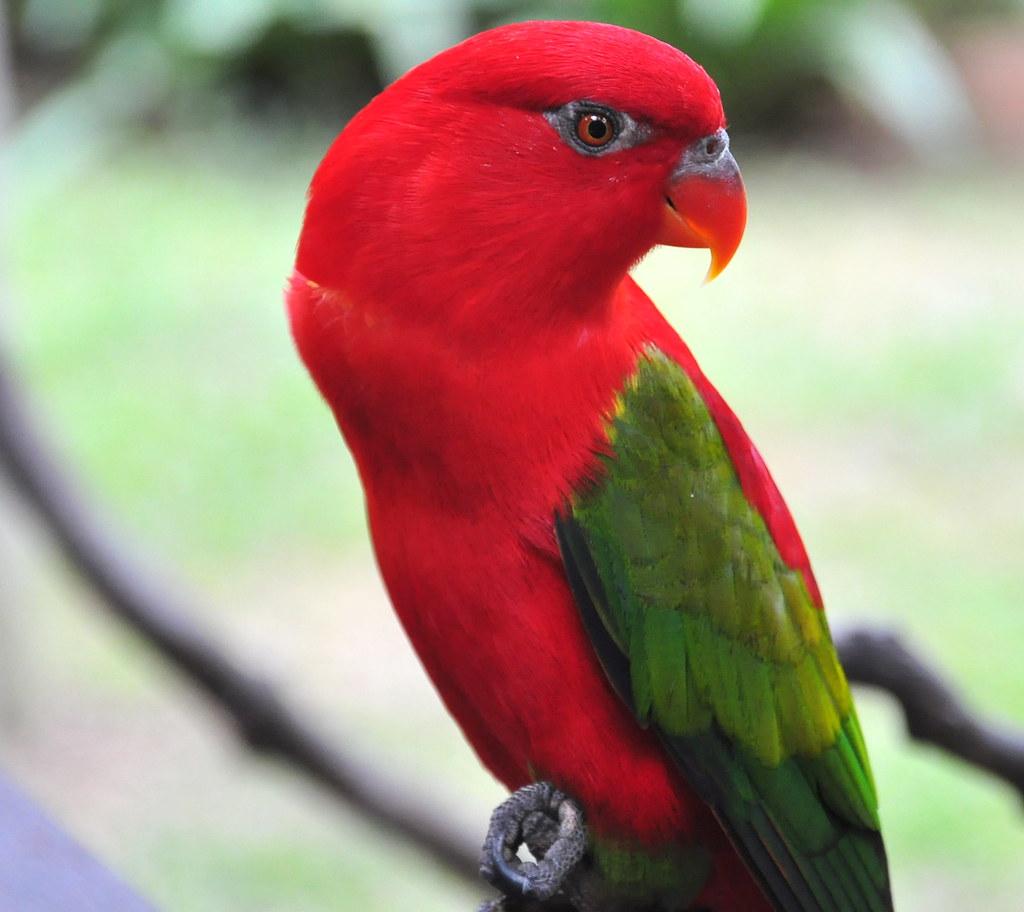 Beauty of a Parrot 鸚姿美 ...