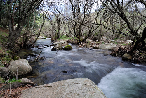 naturaleza rio agua plantas manzanareselreal d60 comunidaddemadrid albertogonzalez lapedriza cauce nikond60 mywinners abraxas139