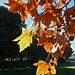 Touch of Autumn, Adelaide _6807