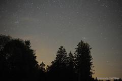 Andromède au dessus des sapins DSC_9954