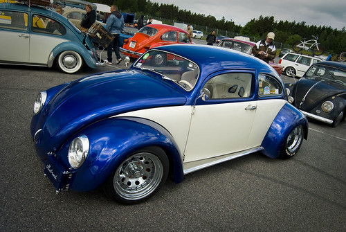 Polish Beetle by T.Onnemar