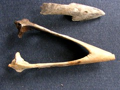 adze(0.0), carving(0.0), antler(0.0), weapon(0.0), horn(0.0), bow and arrow(0.0), antique tool(1.0), wood(1.0),