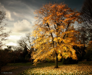 golden tree revisited
