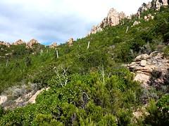 Remontée du sentier direct de Capeddu : l'aiguille 726m