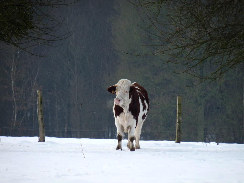 """Concours """"Paysage d'hiver avec animal"""" 4206504494_be92a96e0b_b"""