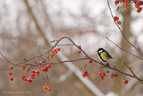 france bird tit olympus e3 oiseau mangeoire wassy champagneardennes