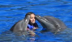 animal, marine mammal, common bottlenose dolphin, marine biology, short-beaked common dolphin, dolphin, spinner dolphin, tucuxi,