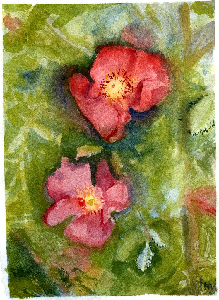 negative roses