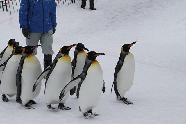 2010.01.29 蜜月DAY9-旭山動物園企鵝散?II