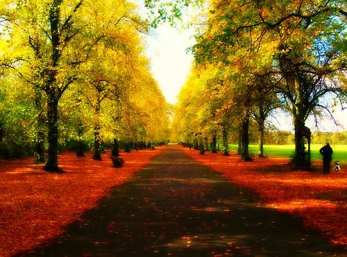 wood uk autumn trees england leaves weather season golden view northwest path walk scenic row lancashire preston sunlit ashton picnik pleasent lancs haslampark tonyworrall
